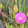 春の散歩道に咲く雑草の花たちに癒やされる