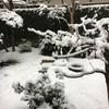 昨日は雪国でした。そして今日はサリーちゃんとウニの精進落とし。