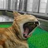 10月前半の #ねこ #cat #猫 どらやきちゃんB
