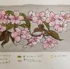 山桜の版画