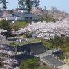 【ホテル周辺情報】由利本荘〜春の花巡り2019〜本荘さくら祭り♪
