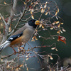 2020年2月22日の鳥撮り-東京都練馬区