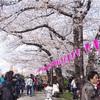 【おでかけ】隅田川でお花見してきました