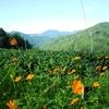 秋らしさと茶畑