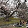 鴨川沿いの桜と、学生の街京都の春