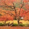 八滝ウッディランドの紅葉が美しすぎる件