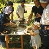 エッセイ 新しい「食」と「農」の取り組み〜サラダ・レボリューションを導きだす迄〜道のりvol.3