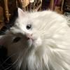 胃が荒れてもうて:猫の健康効果