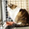 O次郎 猫の水分補給