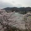 やっぱり満開の桜のアーケード下を歩きたい!雨降る前に。
