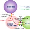 052【関節リウマチ(その3)】制御性T細胞研究から生まれた薬「アバタセプト」がリウマチに効く訳