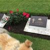 可哀想な老愛犬を散歩(*´-`)させながら大戦で捕虜になった人たちに思いを馳せた。