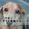【里親募集・公園に捨てられたアルくん】愛知県 Dog Rescue HUG ~SAKURASAKU~より