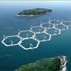 日本はエネルギー大国である・・・風力・波力・貧乏ゆすり力