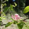 週末農園の春の様子とアジサイとブルーベリーを植えたこと