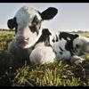 食品産業に潜む腐敗【Netflixオリジナル】【感想】