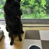 甲斐犬サン、人生の苦味を知る……_:(´ཀ`」 ∠):
