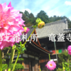 【西国三十三所巡り】一度は見たい!岡寺のダリヤ。日本で最初の厄除け観音様のお寺。