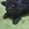 うちの黒猫ティッシュケースの顎が長い