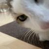 ひまりちゃん「うどん」を作る!我が家のお猫様ひま日記20