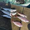 【超高級魚Get!!回】9月22日(水)釣行記 串本大島沖 アンカーカセ