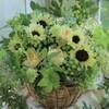 夏のお花といえば・・・