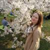 イスラエル杉原千畝に記念植樹リトアニアも杉原公園の桜が満開に。日本のテレビ局で→誰っすか?それ?