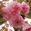2009 春の花