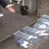 横浜市戸塚区アミメニシキヘビが捕獲!アパート屋根裏で捕まる!専門家は近くで見つかると予測