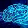 脳の発達や成長と、脳の成熟は、違うと思った話