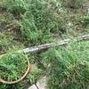 ステキなお庭(自称)の草刈り