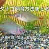 タナゴ飼育方法まとめ 水槽・餌・混泳・繁殖について詳しく解説