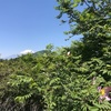 サンショウバラを見に不老山へ