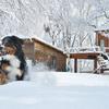 雪 だいすき!