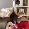 エマの寝場所