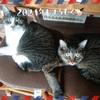 セブンのマルチコピー機で作るウチ猫の年賀状と、福銭。