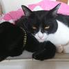 今日の黒猫モモ&白黒猫ナナの動画ー860