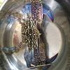 ワタリガニの甲羅って美しい。。。