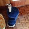 ルーシーの部屋のキャットタワーも壊れました