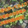 【今年最後のお茶揉み】家の家庭菜園「お茶を作ってみよう」【お茶は買うほうが早い?】