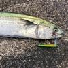 【ショアジギング 】サゴシ・サワラを釣るためのアクション・ジグセッティングとは【サゴシ・サワラ】