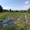 草刈り作業!!!
