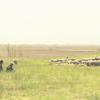 【添乗員同行ツアートルコ旅行・10】羊が沢山チャタルホユック