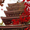 松戸 本土寺で紅葉狩り