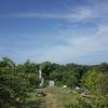 夏の聖崎公園