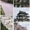 毎年200万人が花見を楽しむ、日本一の桜まつり!!弘前公園の「弘前さくらまつり」に行ってみた!!!~「死ぬまでに行きたい!世界の絶景」に選ばれた桜の絨毯がマジで美しすぎる!!~