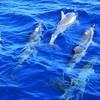 残酷?伝統?和歌山県太地町のイルカ追い込み漁問題
