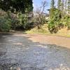 長岡公園の蓮池(京都府長岡京)