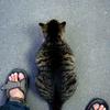 本日の検索/「猫好きに衝撃!?『飼育女性の肺がん死亡率2.85倍』」(毎日)からネタ元(たぶん)へ