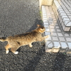 5月前半の #ねこ #cat #猫 その3